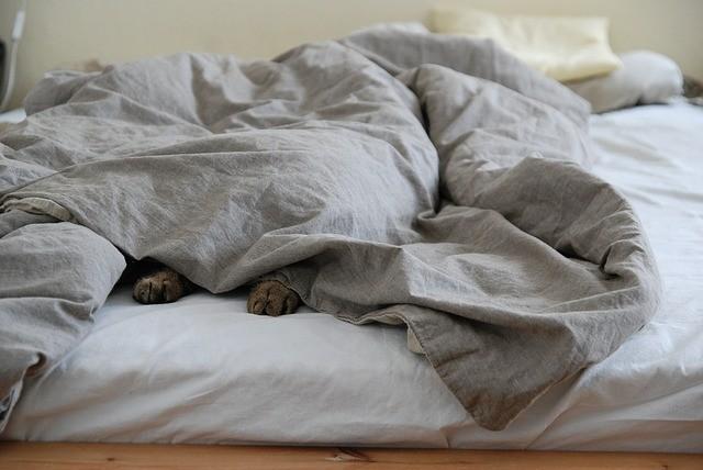Postel a kočka v peřině jako symbol komfortní zóny